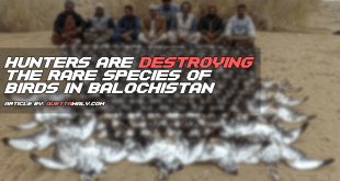 Hunters are Destroying the Rare Species of Birds in Balochistan