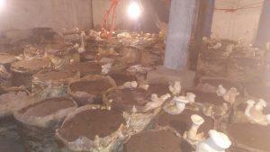 Amanullah Khan Mushroom Firm Quetta