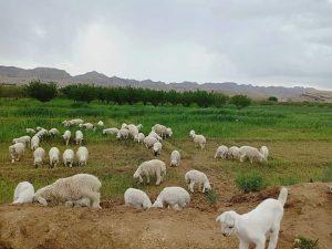 Natural Photograph Balochistan