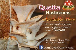 Quetta Mushroom Amanullah Khan