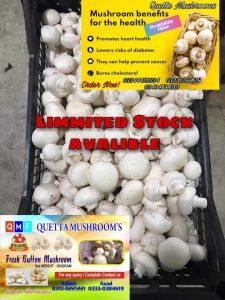 Quetta's Fresh Button Mushrooms